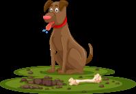 pet digging up the turf